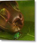 Halicid Bee 2 Metal Print
