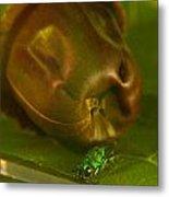 Halicid Bee 4 Metal Print