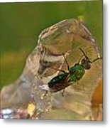 Halicid Bee 8 Metal Print