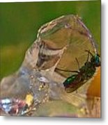 Halicid Bee 9 Metal Print