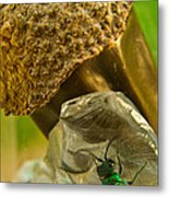 Halicid Wasp 5 Metal Print