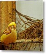 Halloween Yellow Bird Metal Print