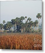 Hammock, Everglades National Park Metal Print