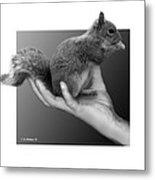Hand Full Of Squirrel Metal Print