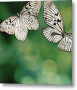 Handkerchief Butterfly Or Wood Nymph Metal Print