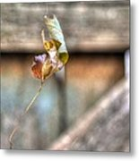 Hangin' By A Thread Metal Print