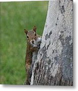 Hanging And Chilling Metal Print