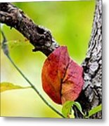 Hanging By A Limb Metal Print
