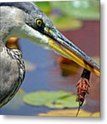 Hanging By A Tail Metal Print