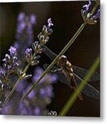 Hanging In The Lavender Metal Print