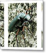 Happy Beetle Metal Print