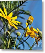 Happy Daisies Metal Print by Kaye Menner
