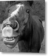 Happy Horse Metal Print