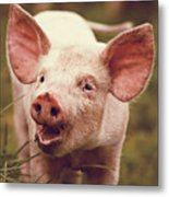 Happy Little Piglet Metal Print by Liesel Conrad