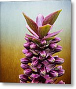 Happy Purple Pods Metal Print by Michael Taggart