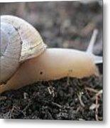 Happy Snail Metal Print