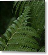 Hapuu Pulu Hawaiian Tree Fern - Cibotium Splendens Metal Print