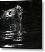 Harbor Seal Metal Print