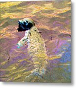 Harbor Seal Metal Print
