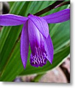 Hardy Orchid 1 Metal Print