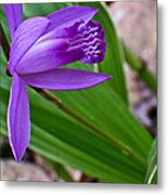 Hardy Orchid 3 Metal Print