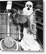 Harlows Monkey Experiment Metal Print