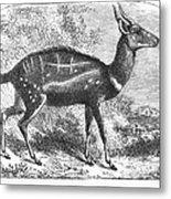 Harnessed Antelope Metal Print