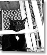 Harry One Twisted Cat Metal Print
