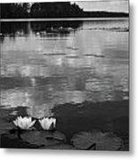 Haukkajarvi Water Lilies In Bw Metal Print