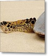 Hawaiian Green Turtle Rear Tail Fin Metal Print