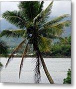 Hawaiian Palm Metal Print