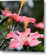 Hawaiian Pink Hibiscus Metal Print