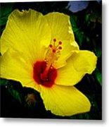 Hawaiian Yellow Hibiscus Metal Print