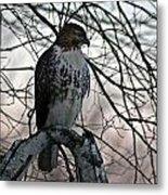 Hawk 6 Metal Print