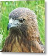 Hawk-eye Metal Print