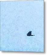 Hawk Eyes Metal Print