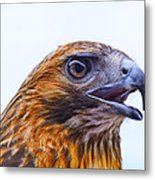 Hawk Head Metal Print