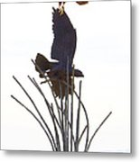 Hawk On Statue Metal Print by Rebecca Margraf