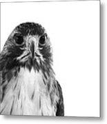 Hawk On White Background Metal Print