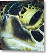 Hawksbill Sea Turtle Portrait Metal Print