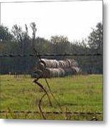 Hay Lined Up Metal Print