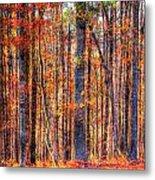 Hdr- Autumn Leaves Metal Print