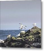 Hdr Seagulls At Play Metal Print by Pictures HDR