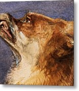 Head Of A Fox Metal Print
