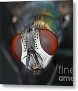 Head Of A Green Blow Fly Metal Print