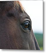 Head Of A Wild Horse In The Wilderness Metal Print