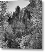 Heart Of The Aspen Forest Metal Print