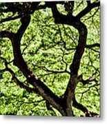 Heart Of The Forest Metal Print
