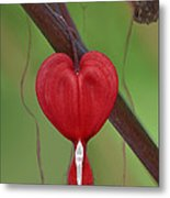 Heart To Heart Metal Print
