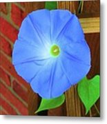 Heavenly Blue Morning Glory Metal Print